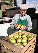 Farmer delivering apples to the Emil Jacoby fruit juice press house in Auggen, Baden_Wuerttemberg, Germany, Europe