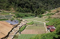 Agricultural land near Tanah Rata in the Cameron Highlands in Malaysia