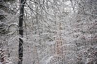 winter snow nature at the Veluwe, Gelderland, Holland, The Netherlands