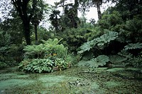 pond with dense vegetation, United Kingdom, England, Dorset, Abbotsbury Subtropical Gardens, Abbotsbury