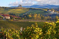 Chianti classico vineyards in autumn
