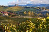 Chianti classico vineyards in autumn