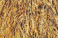 Agrarwirtschaft,Agrikultur,Architektur,Dachstroh,Dorf,draussen,Europa,europaeisch,Farbe,Feld,gelb,Getreide,Hayrick,Heu,Heuballen,Heuhaufen,Karpaten,La...