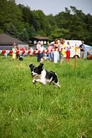 action,Aussenaufnahme,Bewegung,Hochformat,Hunderennen,laufen,Mensch,Mischling,Mix,rennen,Spass,Mischlingshund,Mischlingshunde,Mischlings_Hund,Mischlin...