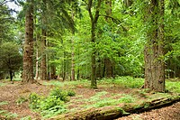 in the New Forest, United Kingdom, England, Hampshire