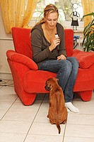 Rhodesian Ridgeback Canis lupus f. familiaris, an eight weeks old puppy is sitting and begging in front of a woman sitting in an armchair, eating a ch...