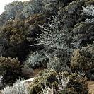 forest with hoar frost in the Minya Gongka region, China, Sichuan, Minya Gongka, Osttibet, Kham, Kangding