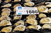 oysters Ostreidae, fresh oysters, Australia, Sydney