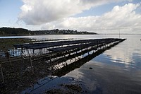 Oyster farm in the Atlantic, near Roscanvel, Crozon peninsula, South Finistère, Bretagne, Brittany, France, Europe