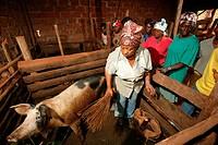 Women feeding pigs in a piggery, Bamenda, Cameroon, Africa