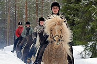 Islandic horse riding at Ku_Ru_stables, Finland, Kuusamo