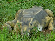 Angled Shield Goniopholis, lying in a meadow, ancestor of the recent crocodiles