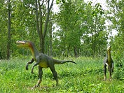 Fast Hunter Velociraptor, two individuals on a clearing