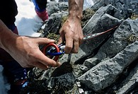 Male hands hooking a figure eight descender into an aluminium carabiner tied to a rock with a loop of cord