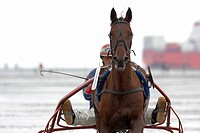 Trotting racer, Duhner Wattrennen, Duhnen Trotting Races 2008, the only horse race in the world on the sea bed, Cuxhaven, Lower Saxony, Germany, Europ...