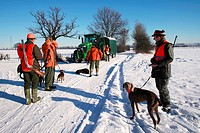 domestic dog Canis lupus f. familiaris, hunter with dogs in snowy landscape, Germany