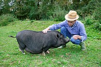 German farmer cuddling with pot-bellied pig, Upper Bavaria, Bavaria, Germany, Europe