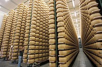 Cheese storage with parmesan cheese (cheese factory), Parma, Emilia Romagna, Italy