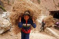 Child hauling straw on his back near Tatopani, Nepal, Asia
