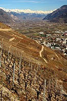 Vineyards avbove the town of Martigny in the Rhone valley, Valaisian Alps in the back, Martigny, Valais, Switzerland