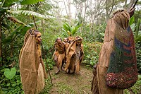 People walking over coffee plantation, Langila, Highlands, Papua New Guinea, Oceania