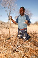 Traditional healer digging for various medicinal herbs, Sehitwa, Botswana, Africa