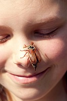 common cockchafer, maybug Melolontha melolontha, sitting on a girl´s nose, Germany
