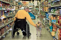 Disabled person in weelchair with Labrador assistance dog in supermarket