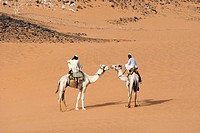 Men riding dromedary camels Camelus dromedarius in the desert of Sudan, Africa