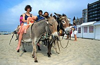 Children riding donkeys Equus asinus on beach, Belgium