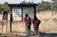 Walkers are reading info panel in forest, nature reserve Kalmthoutse Heide, Belgium