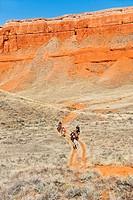 Horseback riders on trail