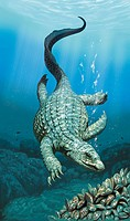 Placodus. Artwork of the extinct marine reptile Placodus gigas. It measured two metres in length and lived during the late Triassic 210 million years ...