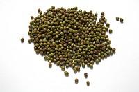 Mung beans Vigna radiata.