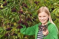 European black elder Sambucus nigra, girl harvesting mature elderberries, Germany