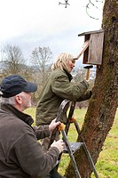 grandpa and grandson fitting nest box at fruit tree trunk , Germany