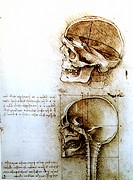 Anatomical design of Leonardo da Vinci. Medical studies of the human body. Anatomical study sheet of which with the Leonardoausstellung in the Oekopar...