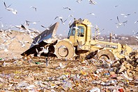 flock gulls in front of a bulldozer on a landfill, Austria, Vienna