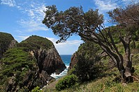 coast near Seal Rocks, Australia, New South Wales, Myall Lakes National Park