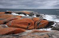 Bay of Fires, noth of The Gardens, north eastern Tasmania, Australia, Tasmania