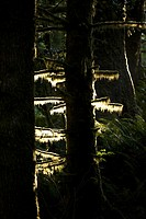 Detail of trees in a forest at sunrise
