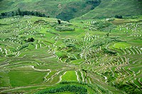 Green rice fields on the hillside, terraced rice fields, Yuanyang, in Xinji, Yunnan Province, People´s Republic of China, Asia