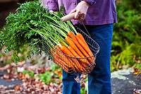 Carrying a basket of carrots