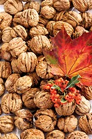 Walnuts, firethorn and maple leaf