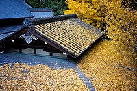 Japanese temple roof covered by yellow leaves in autumn