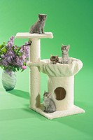four kittens on scratching post