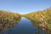 Canal through dense Papyrus plants on the Okawango River, Botswana, Africa