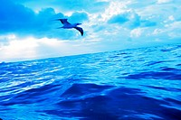 Blue toned view of bird flying over sea