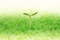 Sapling growing in grass