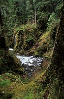 Canyon in Sol Duc Valley of Olympic National Park